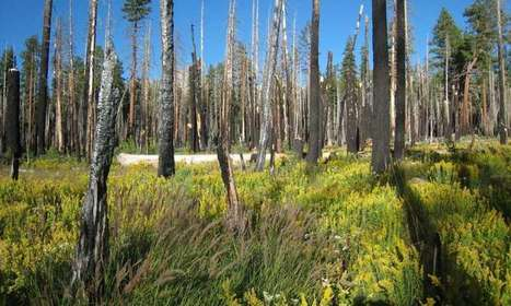 Wildfire management vs. fire suppression benefits forest and watershed | Sustain Our Earth | Scoop.it