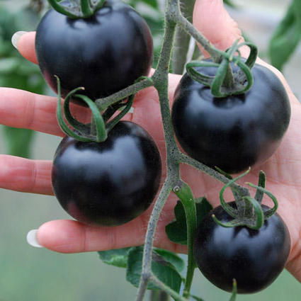 These Jet Black Tomatoes May Look Weird but They're Great for Your Health | Strange days indeed... | Scoop.it