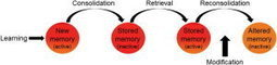 Treating mental illness by changing memories of things past | Psychologie énergétique - EFT - TAT® - Logosynthèse® - REMAP® | Scoop.it
