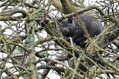 Larmor-Plage. Coincé à 12m, le chat refuse l'aide du pompier et saute dans le vide - - ouest-france.fr | CaniCatNews-actualité | Scoop.it
