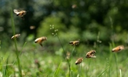 UK drew wrong conclusion from its neonicotinoids study, scientist says | Farming, Forests, Water & Fishing (No Petroleum Added) | Scoop.it