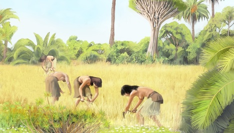 The vegetation of Gran Canaria changed after the arrival of humans | Heritage Daily | Kiosque du monde : Afrique | Scoop.it