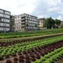 Pourquoi faut-il imaginer un nouveau modèle d'agriculture périurbaine ?   Chuchoteuse d'Alternatives   Scoop.it