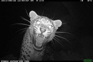 Nurturing Wildlife in War-Torn Afghanistan | Saving the Wild: Nature Conservation in the Caucasus | Scoop.it