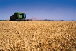 La mejora de la fotosíntesis en trigo podría aumentar su rendimiento hasta en un 40% ‹ Fundacion Antama | Cultivos | Scoop.it