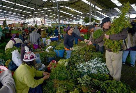 Un mystérieux marché aux herbes à Bogota, lieu de tous les secrets | Ca m'interpelle... | Scoop.it