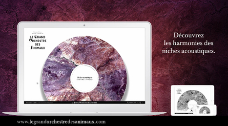 Expérience interactive - explorez les paysages sonores ! via @Fond_Cartier - Bernie Krause | Teaching FRENCH | Scoop.it