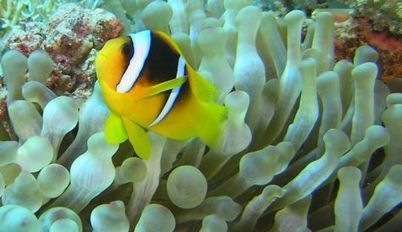 Eilat's coral reef on the mend but not in the clear - Nature & Environment | los animales | Scoop.it