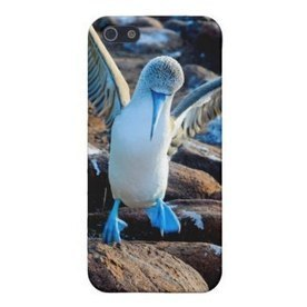 Blue Footed Boobie Dance iPhone 5 cases | iPhone Cases | Scoop.it
