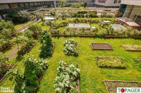 Pas besoin de jardin des potagers sur les toi - Jardin potager bio saint denis ...