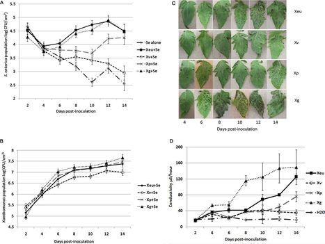 Plant Pathogen-Induced Water-Soaking Promotes Salmonella enterica Growth on Tomato Leaves   Plant - Salmonella or E. coli Interactions   Scoop.it