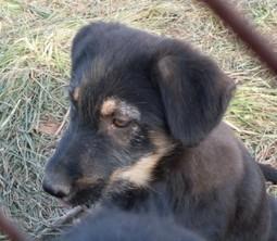 BuckHawk Center   Helping  Domestic Animals And Wildlife   Scoop.it