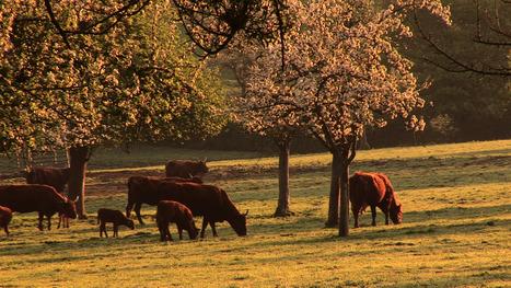 L'agroforesterie replante les arbres au milieu des cultures [vidéo] - France 2 | Solutions alternatives pour un monde en transition | Scoop.it
