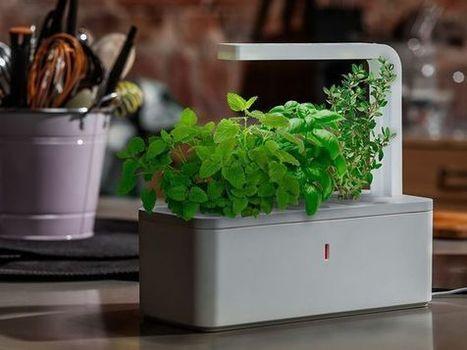 Las plantas que brillan intensamente: Iluminación natural, sin electricidad | Ele | Scoop.it