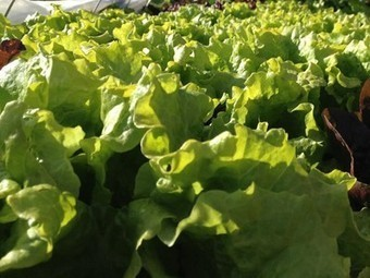 6 Easy spring vegetables you can start now - Treehugger   Garden   Scoop.it