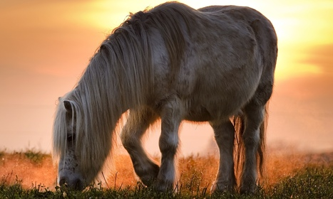 Council removes pony from house on animal welfare grounds | ETHIQUE ANIMALE | Scoop.it