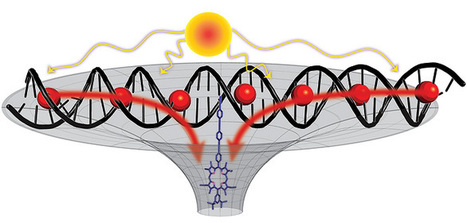 By combining self-assembling DNA molecules with simple dye molecules, 3D DNA antenna harvests solar energy | Amazing Science | Scoop.it
