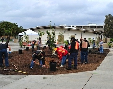 California's First Ever Public Fruit Park in the County of Los Angeles — City Farmer News | Local Food Systems | Scoop.it