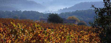 Site officiel de la ville de Bandol - Les vins de Bandol | Gastronomie et vins dans le tourisme | Scoop.it