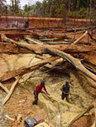 Mining in Venezuelan Amazon threatens biodiversity, indigenous people | protecting the amazon diversity | Scoop.it