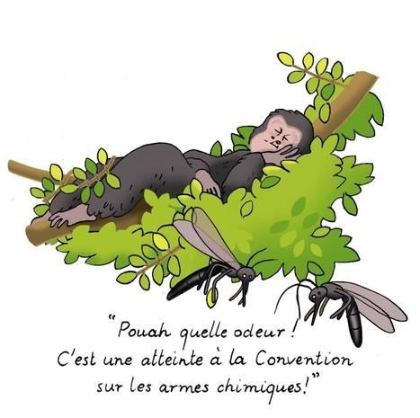 Les chimpanzés s'aménagent-ils des lits anti-moustiques ? | EntomoScience | Scoop.it