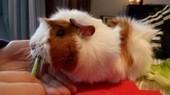 Choisir un nom pour mon rongeur ? - Blog zoomalia.com | PETS & ANIMAUX | Scoop.it
