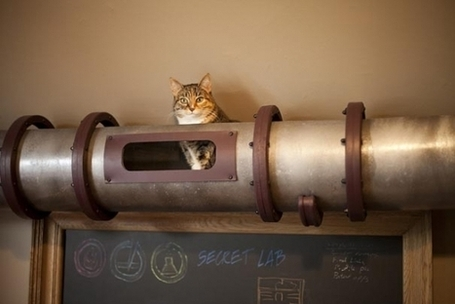 Un tunnel à chats façon SteamPunk | Choose Steampunk | Scoop.it