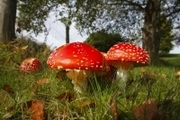 What fungi are trying to tell us about our planet'sfuture | 100 Acre Wood | Scoop.it