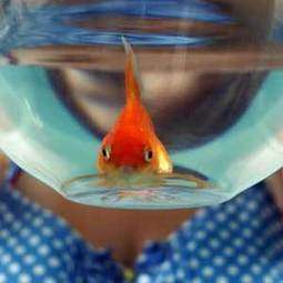 Hotel rents goldfish that listens to you bitch about your day | Digital-News on Scoop.it today | Scoop.it