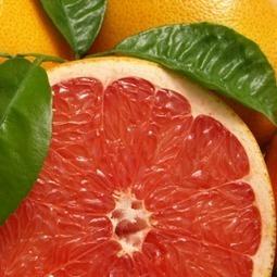 FreshFruitPortal.com » Copa-Cogeca calls for immediate action on South African citrus   Plant pathology   Scoop.it