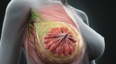 Breast tissue provides clues to avoid effects of aging | Longevity science | Scoop.it
