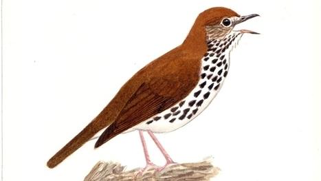 Composer avec les chants d'oiseaux | DESARTSONNANTS - CRÉATION SONORE ET ENVIRONNEMENT - ENVIRONMENTAL SOUND ART - PAYSAGES ET ECOLOGIE SONORE | Scoop.it