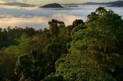 East Asian human activities affect air quality in remote tropical forests | Sustain Our Earth | Scoop.it