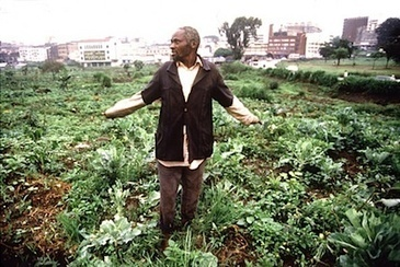 Kenya's ambitious urban farmers | Resilient and Adaptation. | Scoop.it