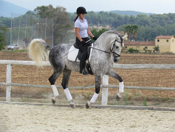 About The P.R.E Andalusian Smart Blood Dressage Horse | Home & Horse | Scoop.it