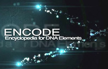 2012 Release: ENCODE data describes function of human genome | SynBioFromLeukipposInstitute | Scoop.it