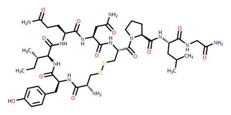 Oxytozin: Mehr als nur ein Kuschelhormon | Körper + Emotion | Scoop.it