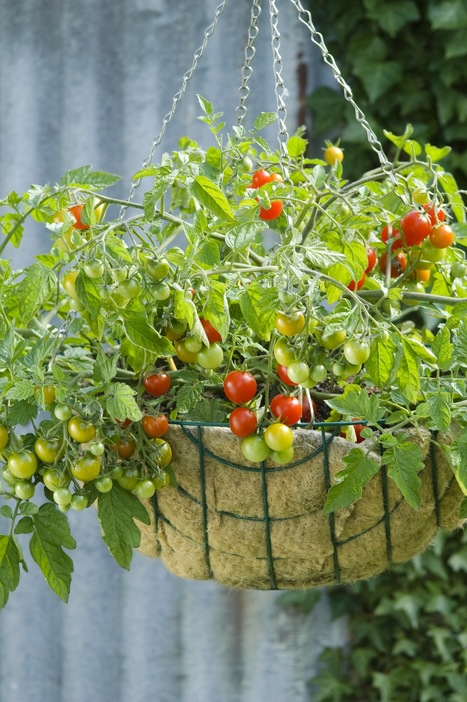 Gardener's Corner: Growing a Kitchen Garden | Gardening | Scoop.it