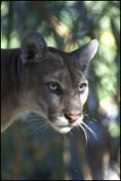 Everglades Wildlife Images - Everglades National Park | Everglades Tour Guide | Scoop.it