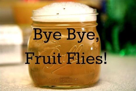 How to Get Rid of Fruit Flies? | Effective Ways of Fly Control | Scoop.it