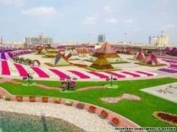Dubai's flowers & plants trade blossoms into AED 140 million-plus ...   Local Flower Shop Online   Scoop.it