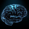 Social Neuroscience Advances