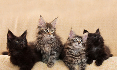 10 Cat Behavior Myths That Cause Problems - Care2.com | Animal Rescue & Shelter Life | Scoop.it