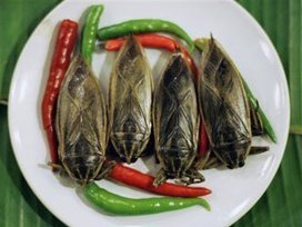 """""""The Solution to Hunger"""" – Eat Bugs SaysU.N. 