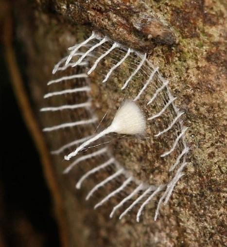 Un insecte qui se fait une clôture | Ca m'interpelle... | Scoop.it