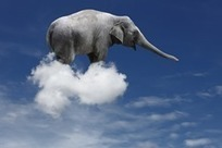 App Security: The Elephant in the Cloudy Room By @LMacVittie | @CloudExpo #Cloud | @CloudExpo Blog | Science & Technology News | Scoop.it