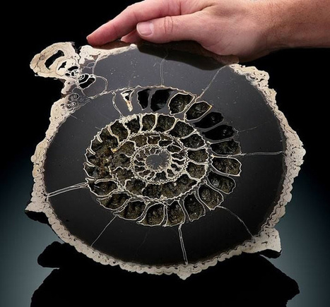 40 απίστευτες φωτογραφίες με πράγματα κομμένα στη μέση | omnia mea mecum fero | Scoop.it