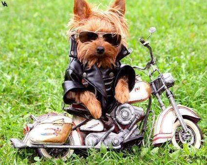 Stylish Dog | High Resolution Wallpapers | Scoop.it