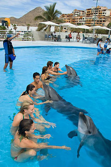 Make a New Friend in Cabo: Cabo Dolphins | The Joy of Mexico | Scoop.it