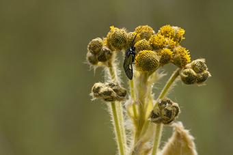 La biodiversidad y los servicios ecosistémicos   Ecología   Scoop.it